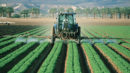 Eurasische Wirtschaftsunion - Zollsenkung für einige landwirtschaftliche Erzeugnisse