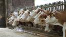 Eurasische Wirtschaftsunion richtet Informationssystem für die Landwirtschaft ein